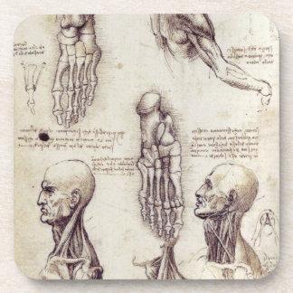 Bosquejos médicos de Leonardo da Vinci, partes del Posavaso