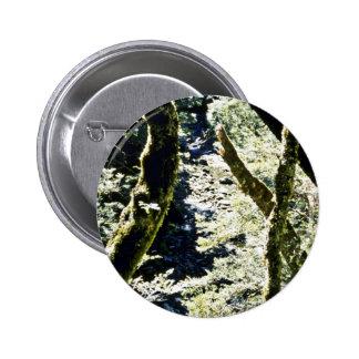 Bosques de la haya río de Leslie montañas de Tas Pins