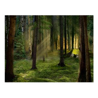 Bosques de la postal del amanecer