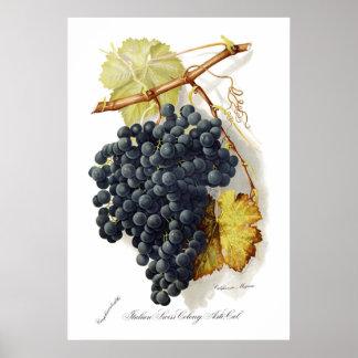Bosqui Mignon CA Wine Grapes Poster