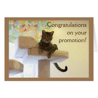 Boss Cat Card