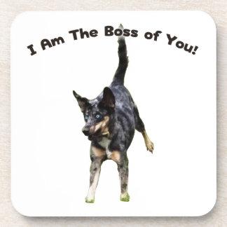 Boss de usted perro de Catahoula Posavaso