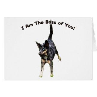 Boss de usted perro de Catahoula Tarjeta Pequeña