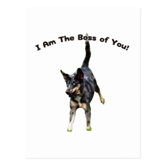 Boss de usted perro de Catahoula Tarjetas Postales