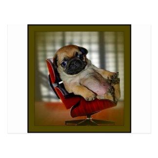 Boss Pug! Postcard
