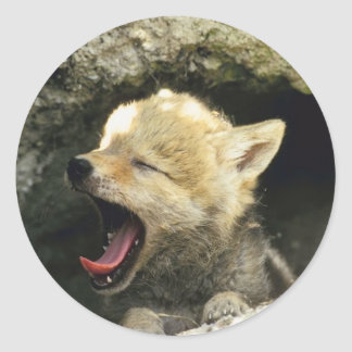 Bostezos del perrito del coyote pegatina redonda