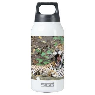 Bostezos soñolientos del tigre