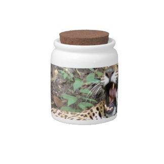 Bostezos soñolientos del tigre jarras para caramelos