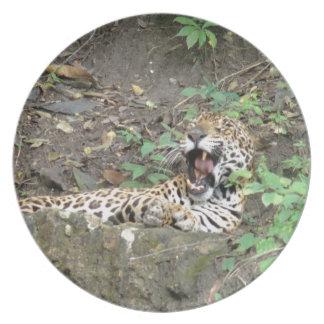 Bostezos soñolientos del tigre plato
