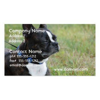 Boston adorable Terrier Tarjetas Personales