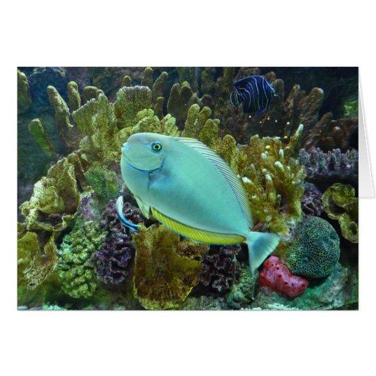 Boston Aquarium Card