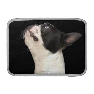 Boston blanco y negro Terrier que mira para arriba Fundas Macbook Air