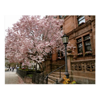 Boston Brownstones Postcard