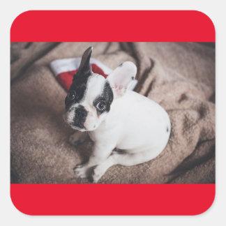 BOSTON Bull PUPPY FOR Christmas Square Sticker