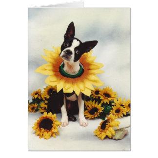Boston Bull Terrier  Dog Card