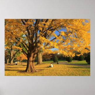 Boston Common Ginko Tree in Autumn Poster