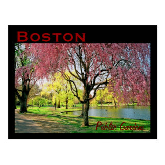 Boston Common Postcard - Customized
