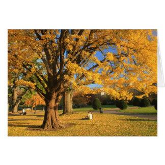 Boston Common Public Garden Autumn Foliage Ginkgo Greeting Card