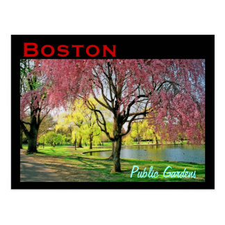 Boston Common Spring Postcard