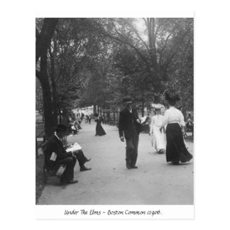 Boston Common, Vintage America 1906 Postcard