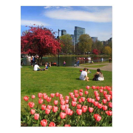 Boston Public Garden Spring Afternoon Postcard