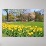 Boston Public Garden Yellow Tulips Print