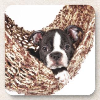 Boston Puppy Coasters