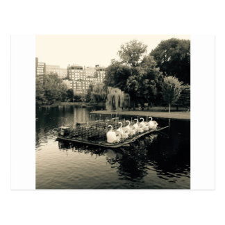 Boston Swan Boats In Black and White Postcard