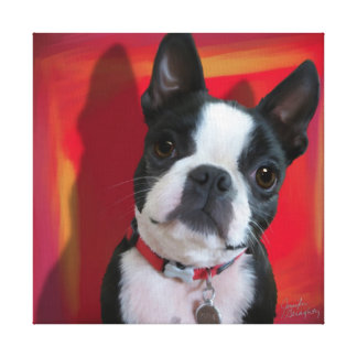 Boston Terrier 12x12 stretched canvas