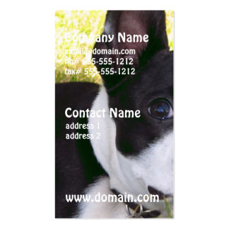 boston-terrier-1 tarjetas personales