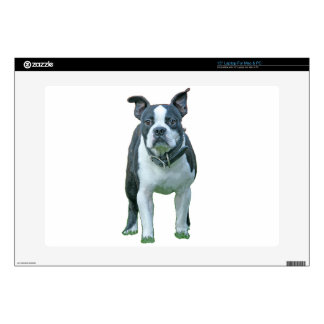 Boston terrier  1b decals for laptops