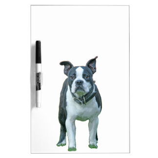 Boston terrier  1b dry erase board