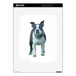 Boston terrier  1b iPad 2 decal