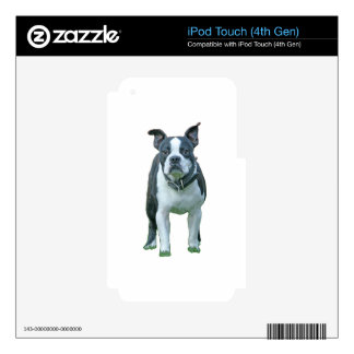 Boston terrier  1b iPod touch 4G decals