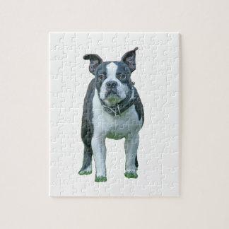 Boston terrier  1b jigsaw puzzle