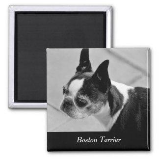 Boston Terrier 2 Bottom Text Magnet