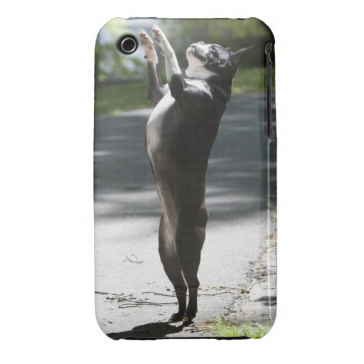 Boston Terrier 2 iPhone 3 Cases
