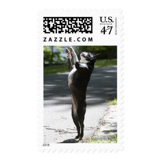 Boston Terrier 2 Postage