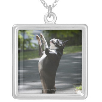 Boston Terrier 2 Silver Plated Necklace