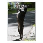 Boston Terrier 2 Tarjeta De Felicitación