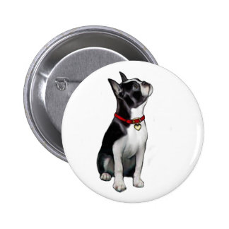 Boston Terrier A - looking up Pin