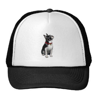 Boston Terrier (A) - looking up Hat