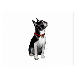 Boston Terrier (A) - looking up Postcard