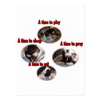 Boston Terrier:  A Time Postcard