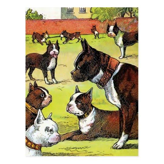 Boston Terrier and Puppies Vintage Illustration Postcard
