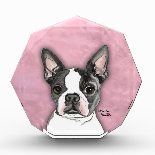 Boston Terrier Award