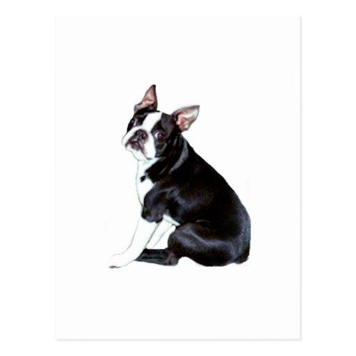 Boston Terrier (b) Tarjeta Postal