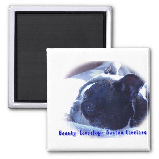 Boston Terrier:  Beauty, Love, Joy Magnet