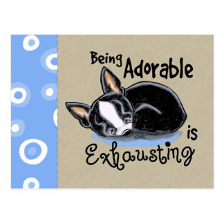 Boston Terrier Being Adorable Postcard