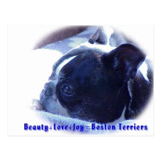 Boston Terrier:  Belleza, amor, alegría Tarjetas Postales